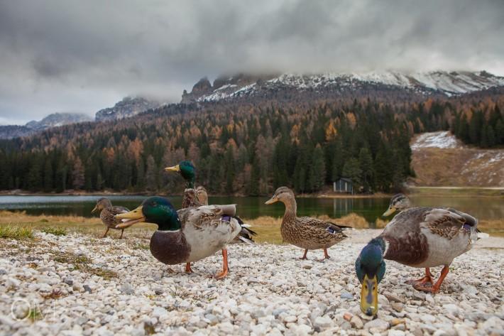 5 dies de tardor a les Dolomites